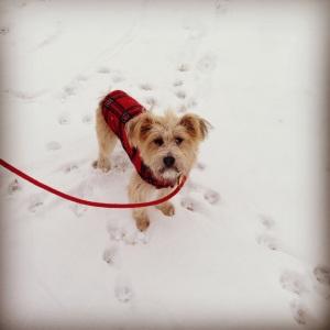 #snowdog