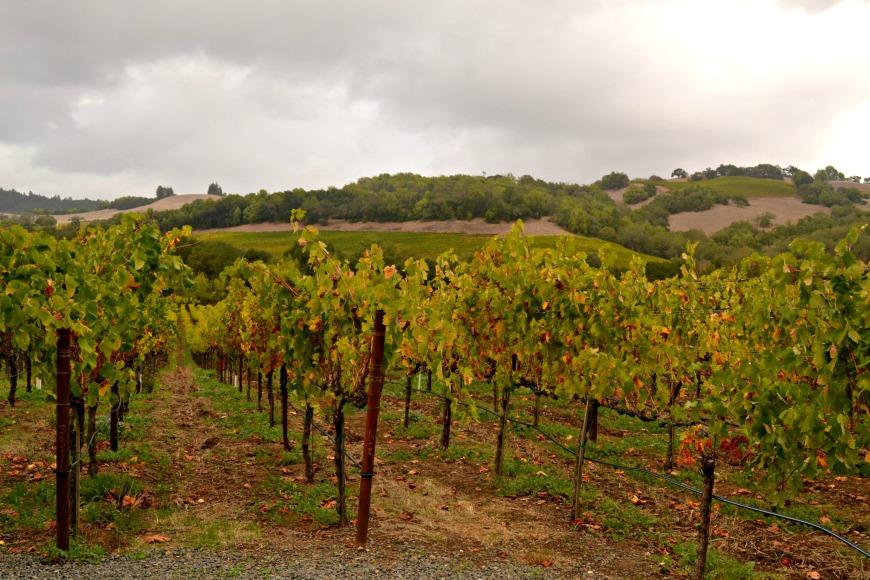 viszlay vineyard grey sky